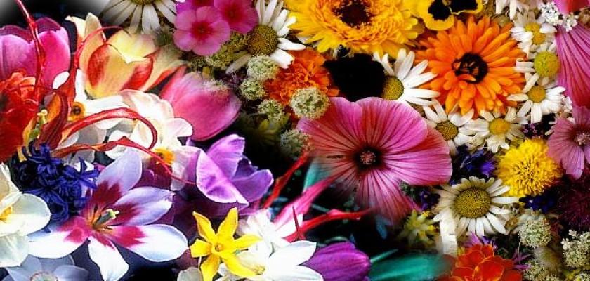 Bütün Sevdiklerinize Doğum Günlerinde Çiçek Hediye Edebilirsiniz