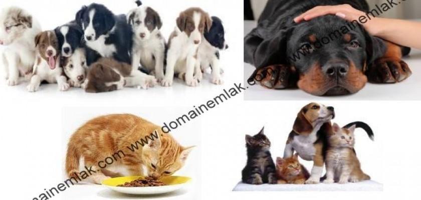 Apartman Hayatında Evcil Hayvan Beslenmesi Ve Haklar
