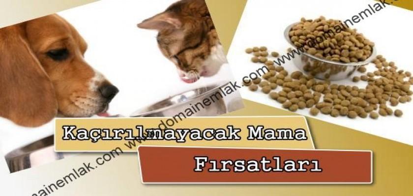 Köpek Mamanızı Clubsafari.com.tr 'den Alın Kararlı Çıkın